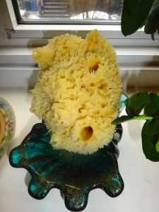 Our new sea sponge.